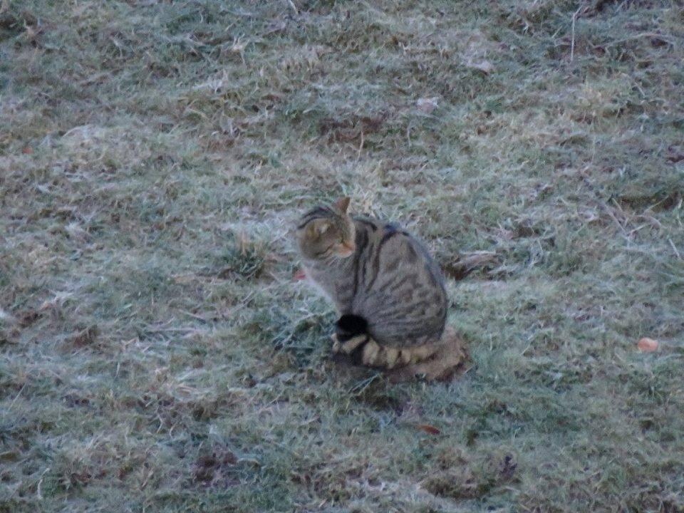 Observación del Gato Montés